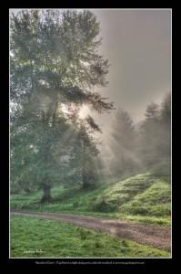 WoodlandDawn